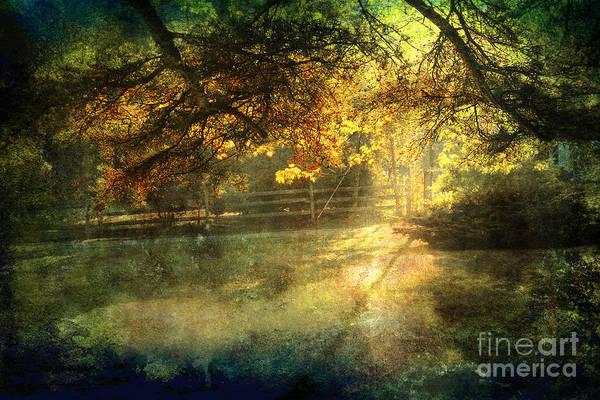 Photograph - Autumn Light by Ellen Cotton