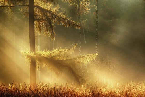 Sunshine Photograph - Autumn Light by Maurice Mies