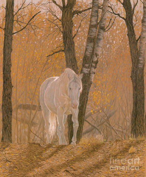 Appaloosa Drawing - Autumn Magic by Laura Klassen