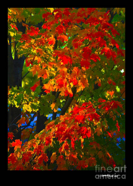 Autumn Maple Art Print