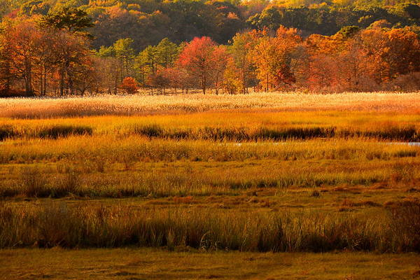 Photograph - Autumn Marsh by Raymond Salani III