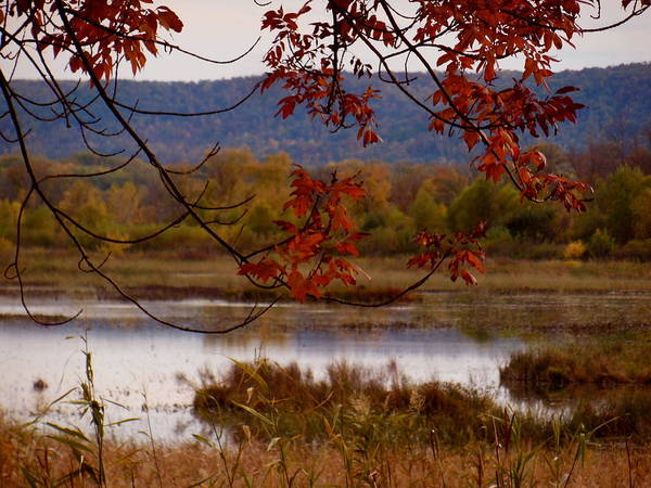 Photograph - Autumn Marsh by Wild Thing