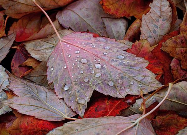 Photograph - Autumn Melange by Rona Black