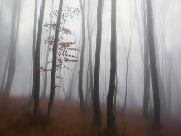 Wall Art - Photograph - Autumn' Mist by Michel Manzoni