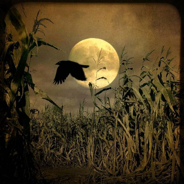 Corn Field Photograph - Crow Flies Past The Harvest Moon by Gothicrow Images