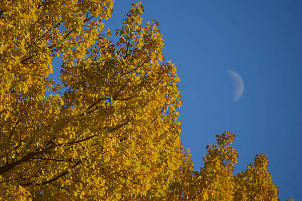 Photograph - Autumn Moonrise by Owen Weber