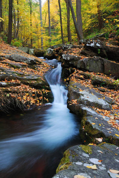 Photograph - Autumn Mountain Creek On Rocks by Songquan Deng