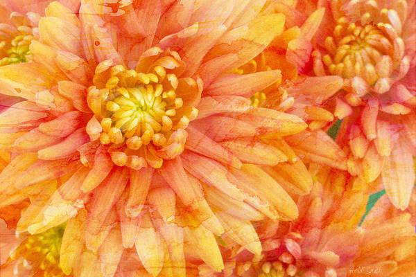 Orange Flower Photograph - Autumn Mums by Heidi Smith