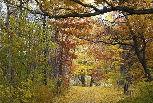 Autumn Nature Trail Art Print