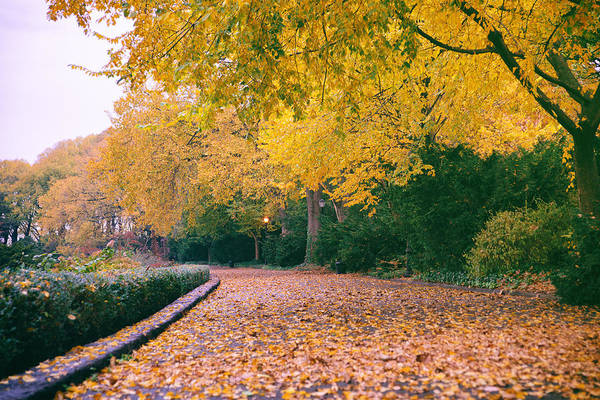 Wall Art - Photograph - Autumn - New York City - Fort Tryon Park by Vivienne Gucwa