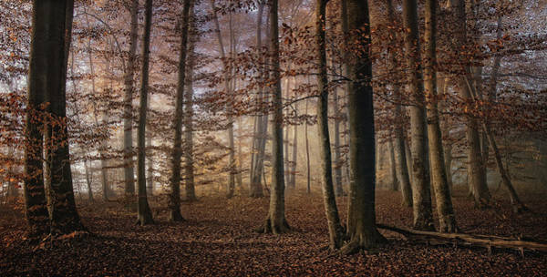 Autumn Foliage Wall Art - Photograph - Autumn by Norbert Maier