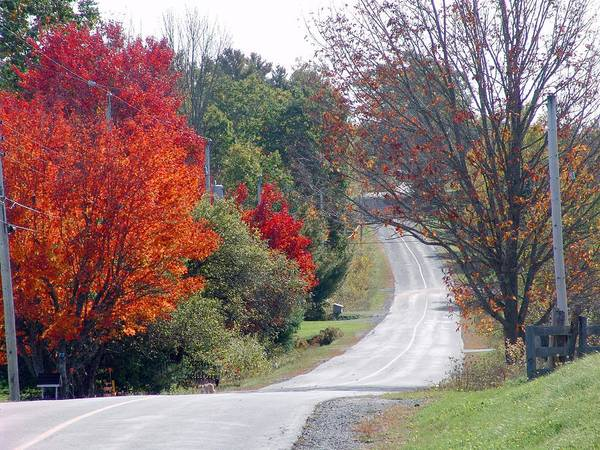 Fall Scenery Mixed Media - Autumn On A Country Road by Janet Ashworth