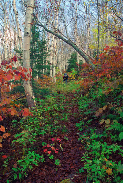 Photograph - Autumn On Mount Hale by Ken Stampfer
