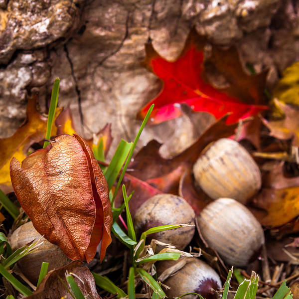 Photograph - Autumn On The Ground by Melinda Ledsome