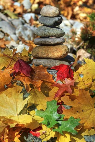 Wall Art - Photograph - Autumn On The Rocks 2 by Donna Kennedy
