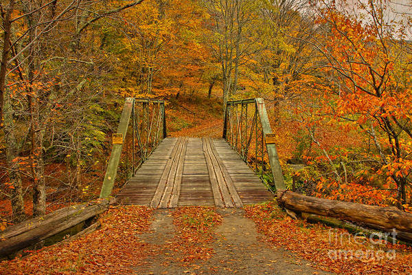 Catskills Photograph - Autumn Orange Colors by Deborah Benoit