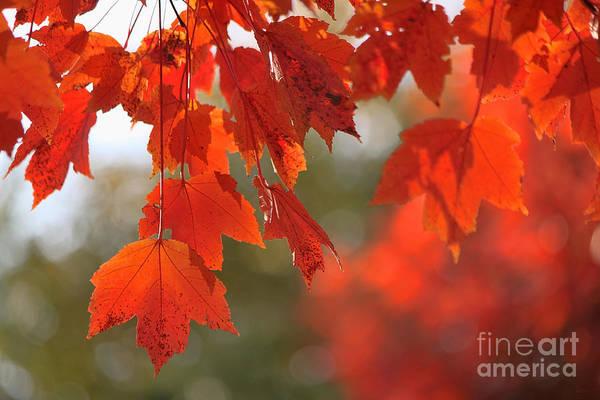 Photograph - Autumn Orange by Jeff Breiman