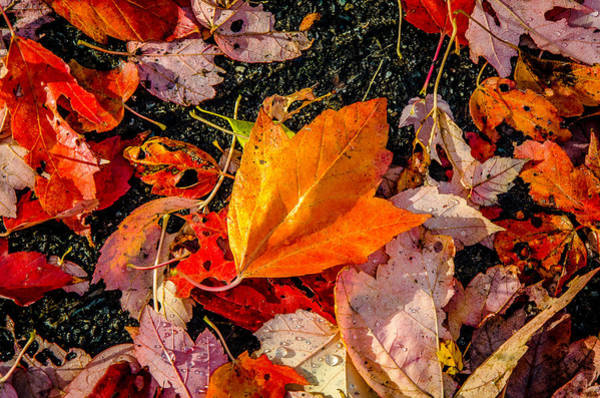 Photograph - Autumn Orange by Roxy Hurtubise