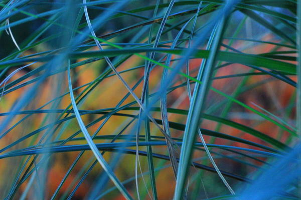 Autumn Pampas Grass Art Print by Rebeka Dove