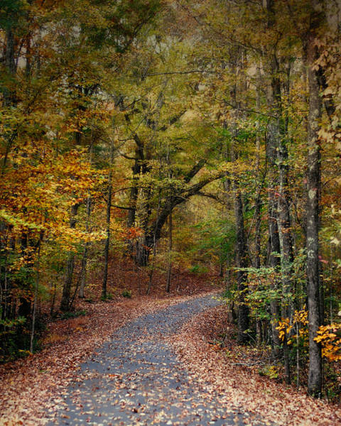 Photograph - Autumn Passage 5 - Fall Landscape Scene by Jai Johnson