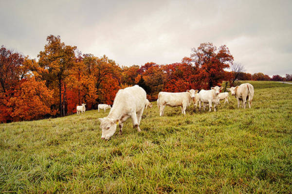 Photograph - Autumn Pastures by Cricket Hackmann