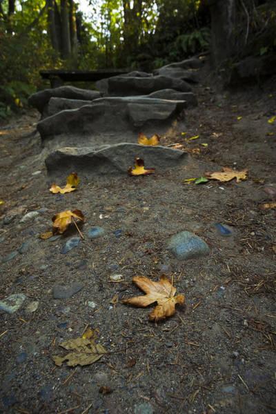 Photograph - Autumn Path by Priya Ghose