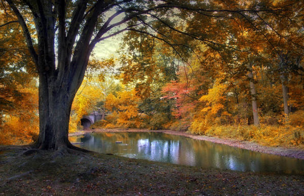 Photograph - Autumn Pond by Jessica Jenney