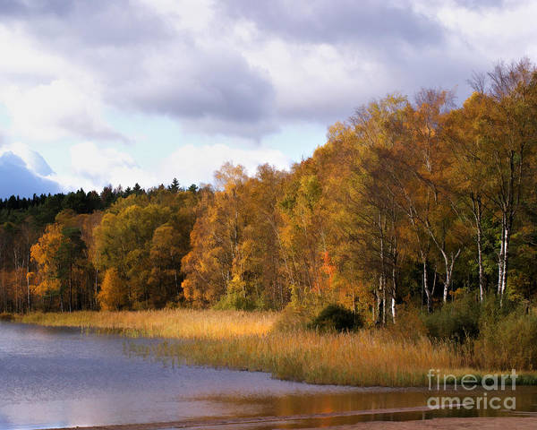 Photograph - Autumn Pond by Lutz Baar