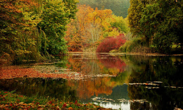 Photograph - Autumn Pond by Marilyn Wilson