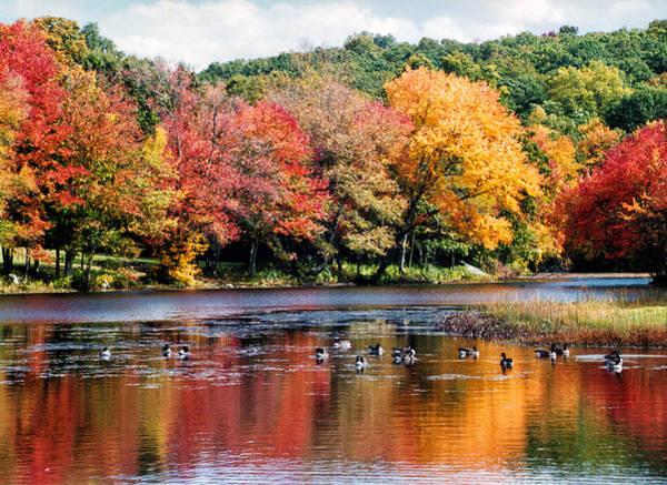 Photograph - Autumn Pond by William Selander
