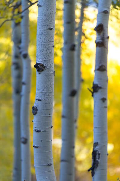 Photograph - Autumn Portrait by Dustin  LeFevre