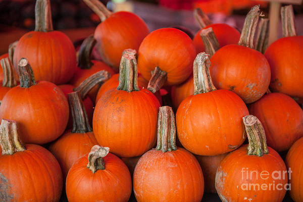 Photograph - Autumn Pumpkins by Dale Powell