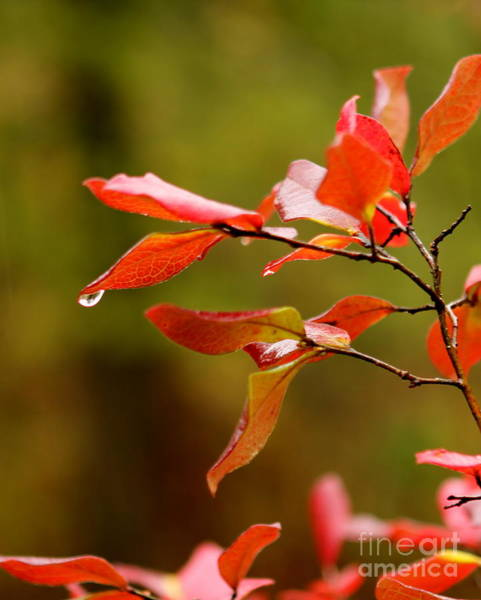 Autumn Raindrop Art Print