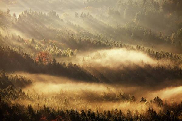 Mist Photograph - Autumn Rays by Martin Rak