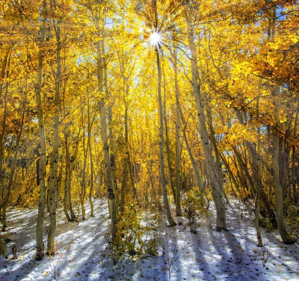 Autumn Rays Art Print