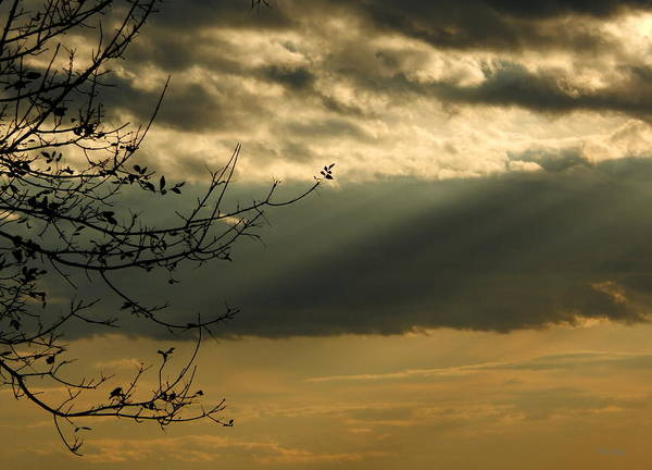 Photograph - Twilight In Autumn by Wild Thing
