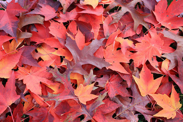 Photograph - Autumn Reds by Gerry Bates