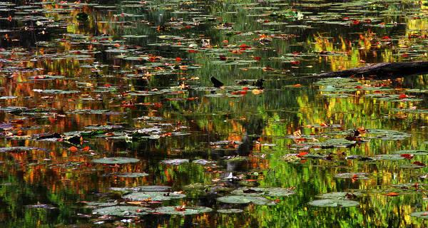 Photograph - Autumn Reflection by Heather Kenward