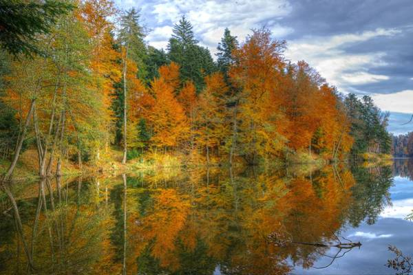 Photograph - Autumn Reflection by Ivan Slosar