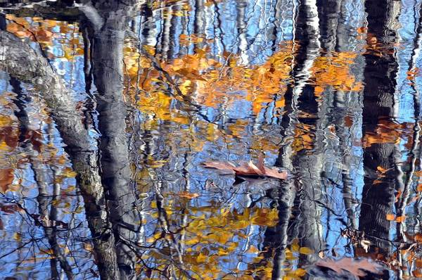 Autumn Reflection With Leaf Art Print