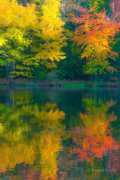 Photograph - Autumn Reflections by Brenda Jacobs