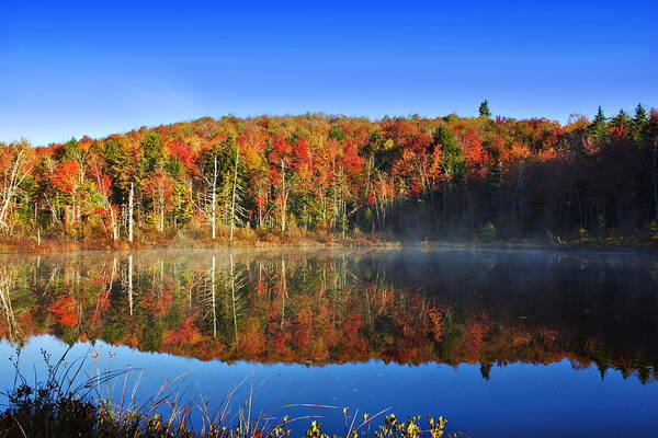 Photograph - Autumn Reflections On A Nh Bog by John Vose
