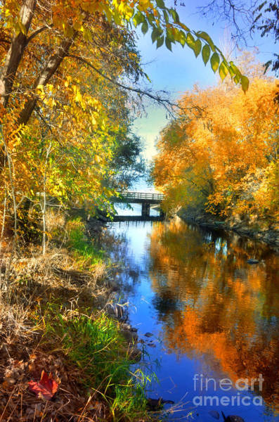 Photograph - Autumn Reflections On A Friday Afternoon by Tara Turner