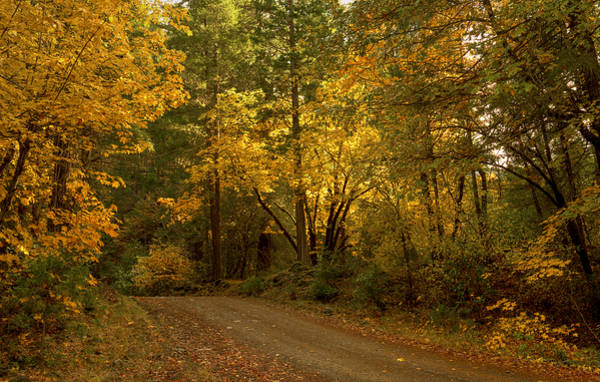 Photograph - Autumn Road by Loree Johnson