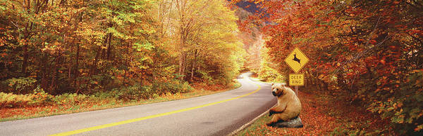 Wall Art - Photograph - Autumn Road With Bear At Deer Crossing by Animal Images