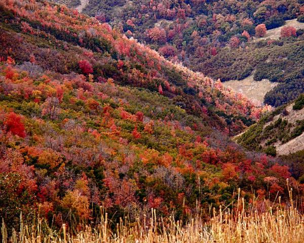 Photograph - Autumn by Rona Black