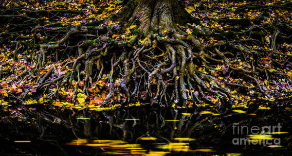 Photograph - Autumn Roots by Michael Arend