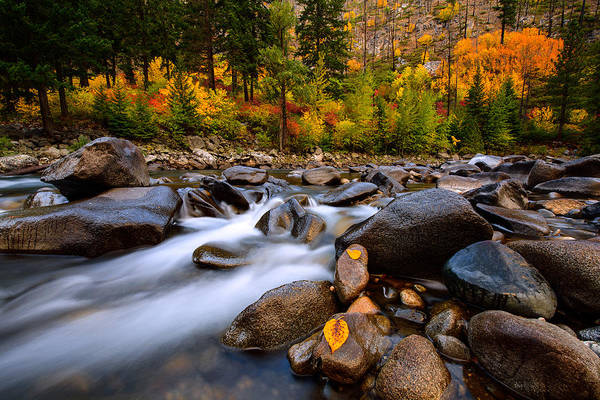 Wall Art - Photograph - Autumn Rush by Dan Mihai