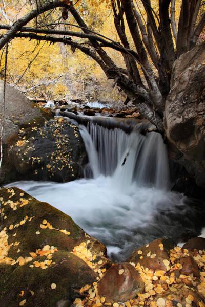 Photograph - Autumn Rush by Darryl Wilkinson