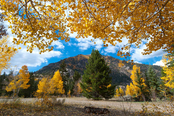 Photograph - Autumn Scene Framed By Aspen by Cascade Colors